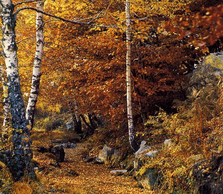 Image forêt : Gardez confiance !
